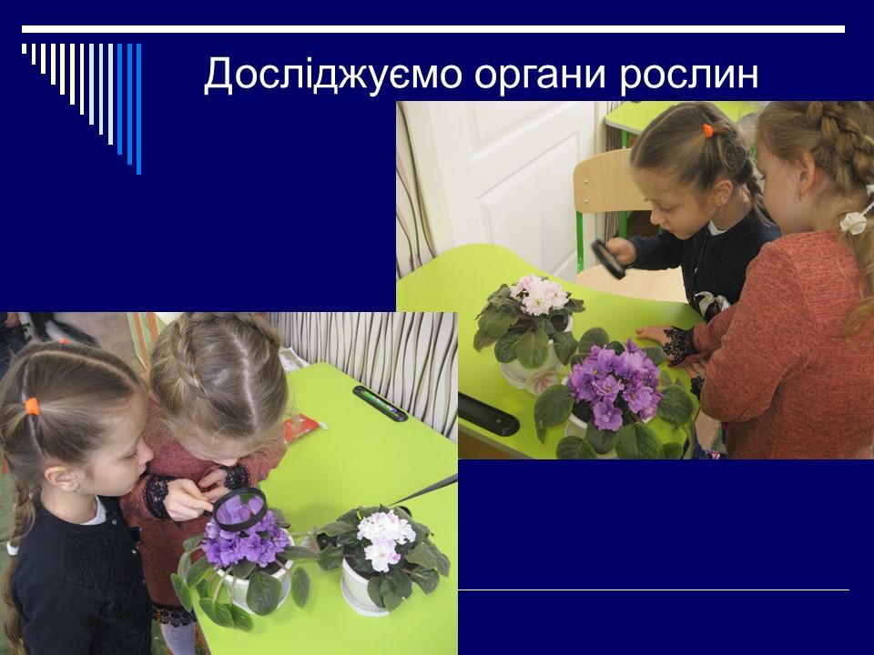 Досліджуємо органи рослин